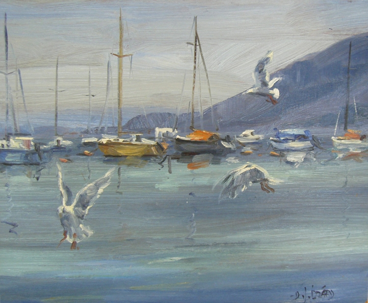 Seagulls at Whytecliff